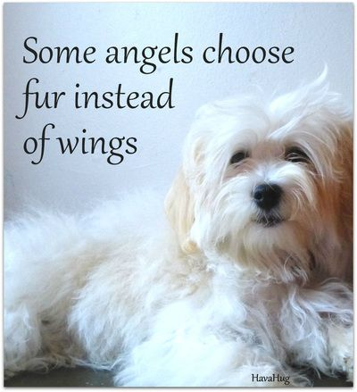 pet-loss-quotes-2