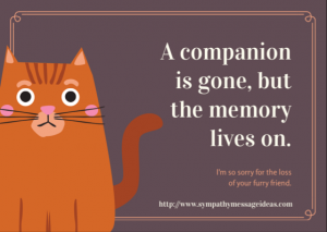 Cat Loss Message