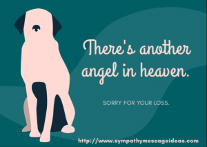 Sorry for your pet loss message