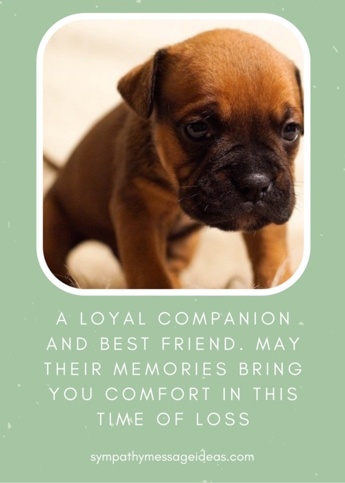 best friend dog sympathy quote