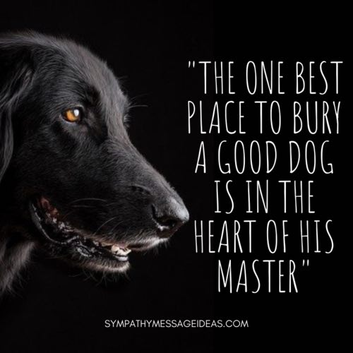 bury dog in heart of master quote