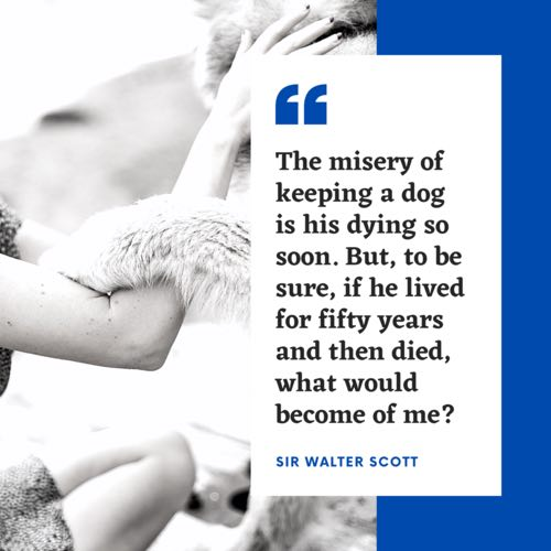 dog passed too soon quote
