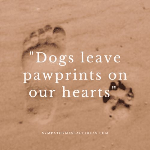 dogs leave pawprints on our lives quote