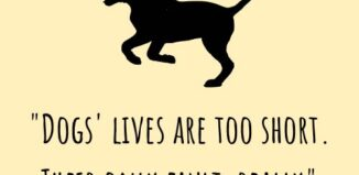 dogs loss quote dogs lives are too short