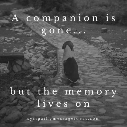 in loving memory dog quote