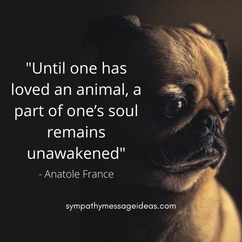 inspirational quote about losing a dog