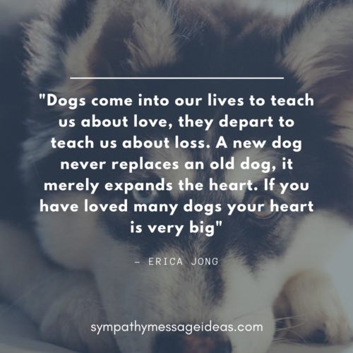loved and lost a dog quote