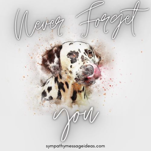 never forget you dog died quote