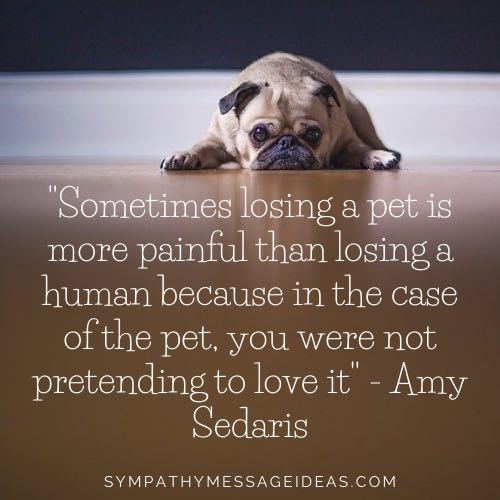 pain of losing a dog quote