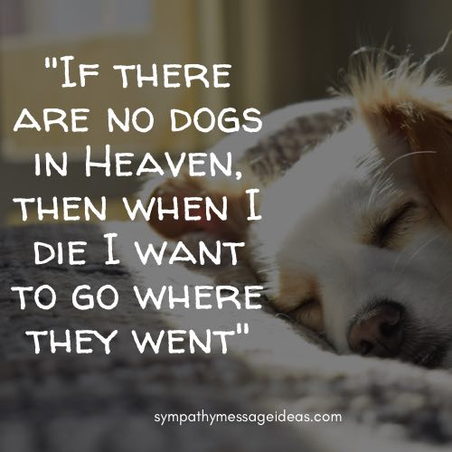 rest in peace dog quote