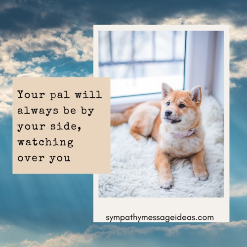 watching over you dog passing quote