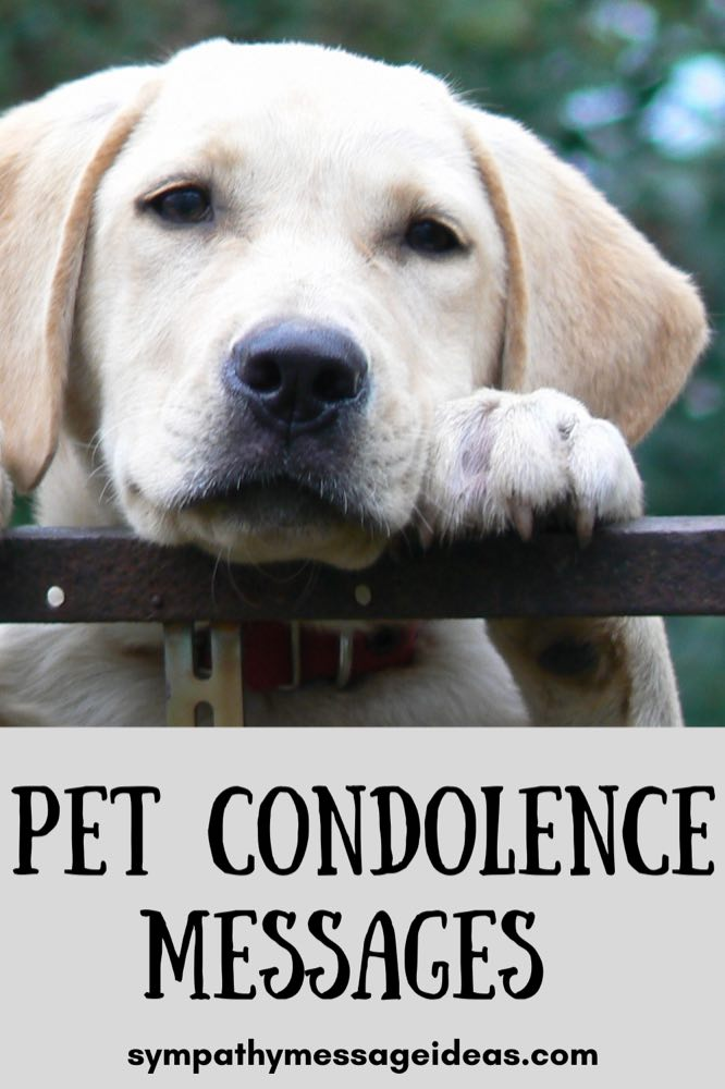 Pet condolence messages and quotes small Pinterest