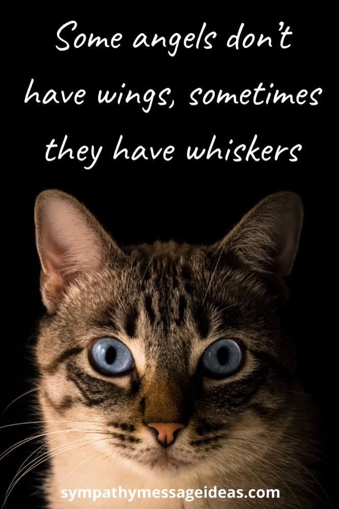 some angels don't have wings, sometimes they have whiskers cat quote