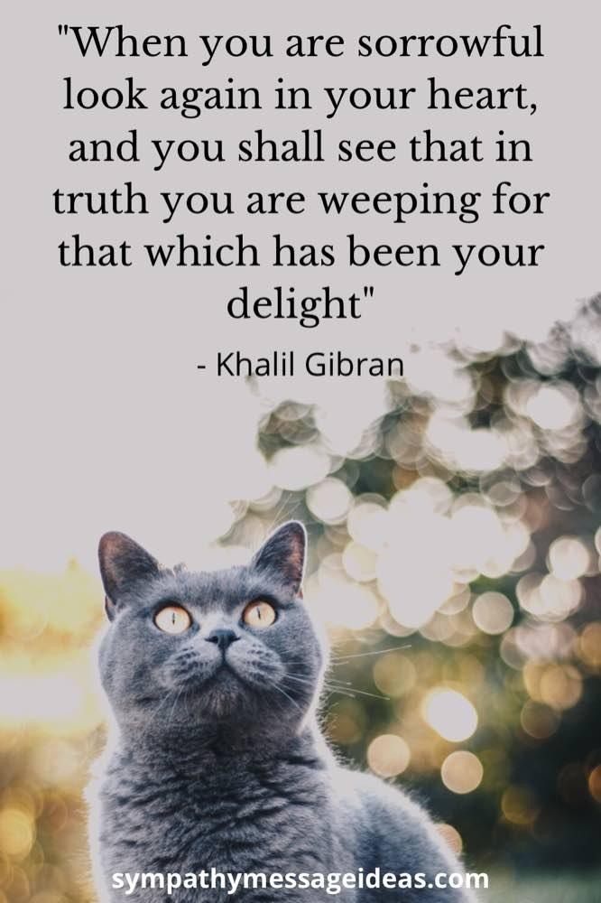 cat grief quote