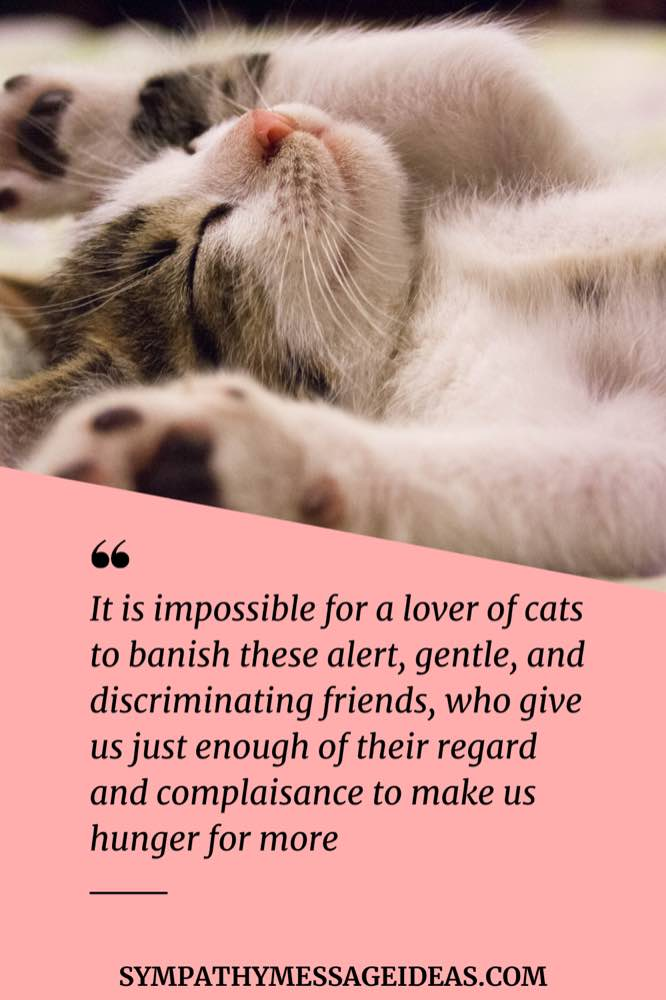 cat lovers loss quote