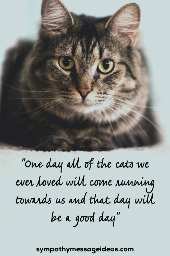 Cats running towards us good day quote