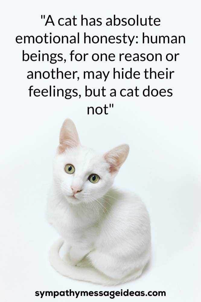 A cat has emotional honesty quote