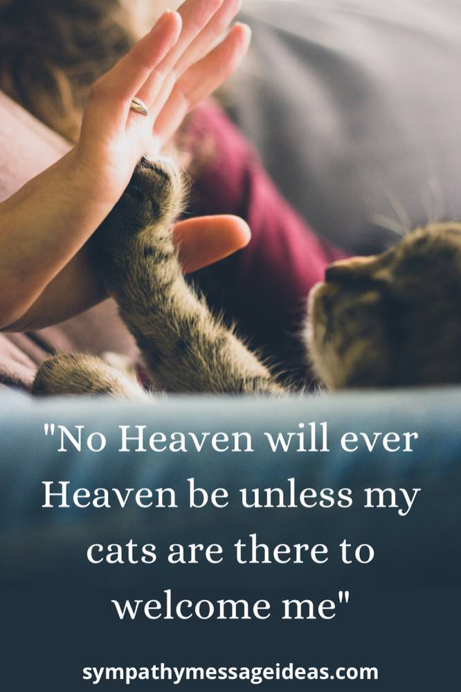 cats welcome in heaven loss quote