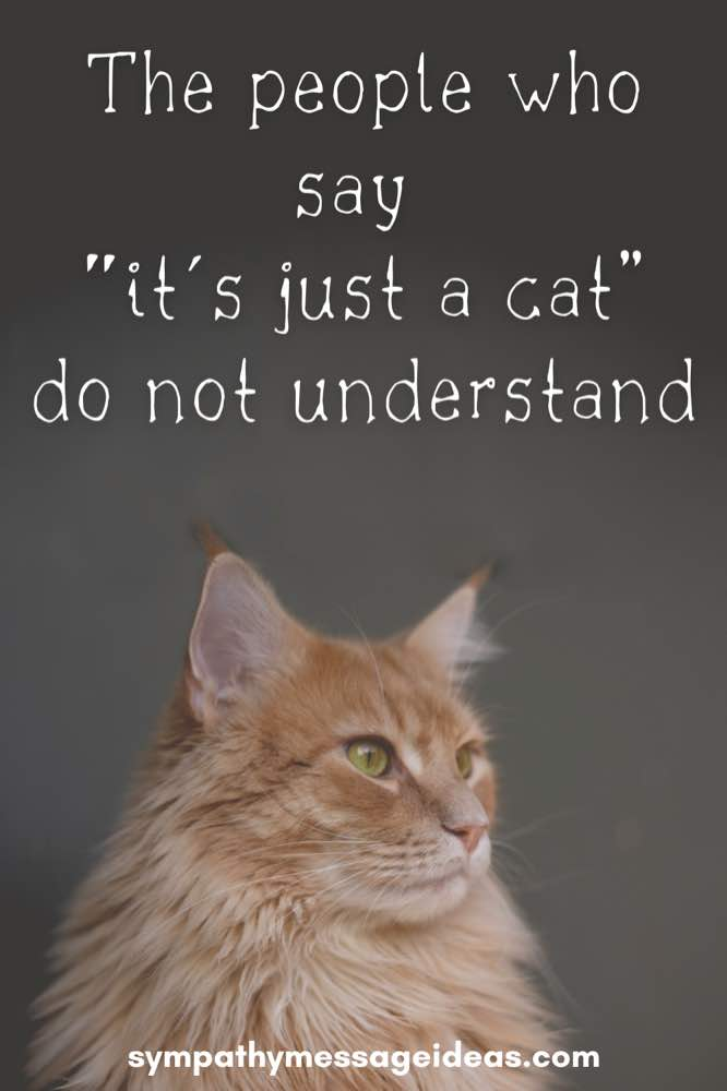 the people who say it's just a cat don't understand