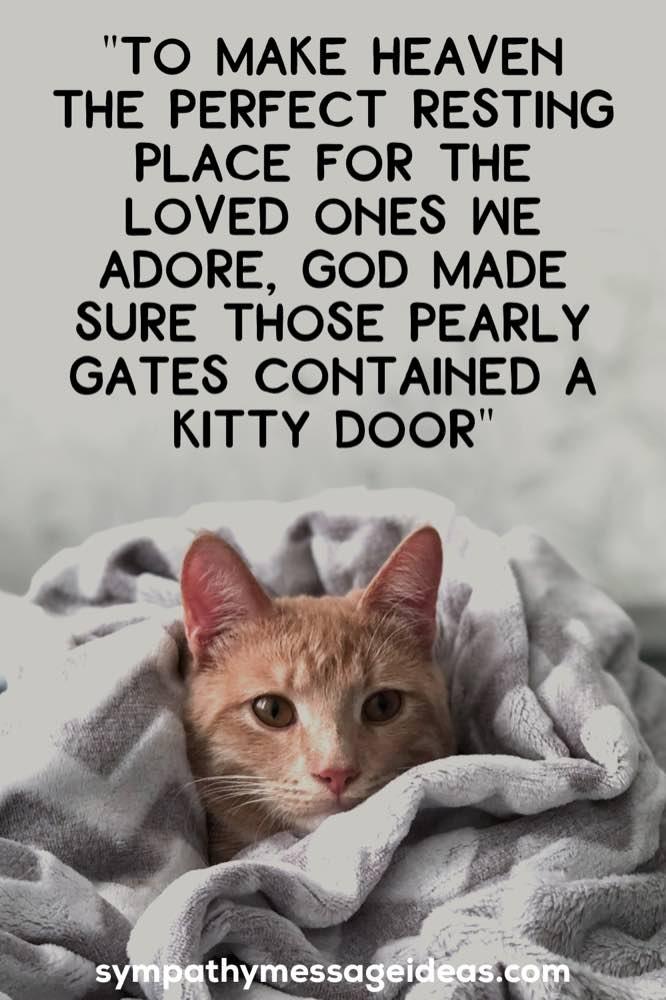 heaven cat passed quote