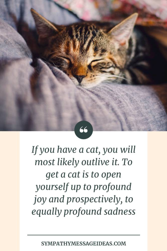 joy and sadness cat quote