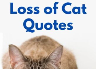 loss of cat quotes