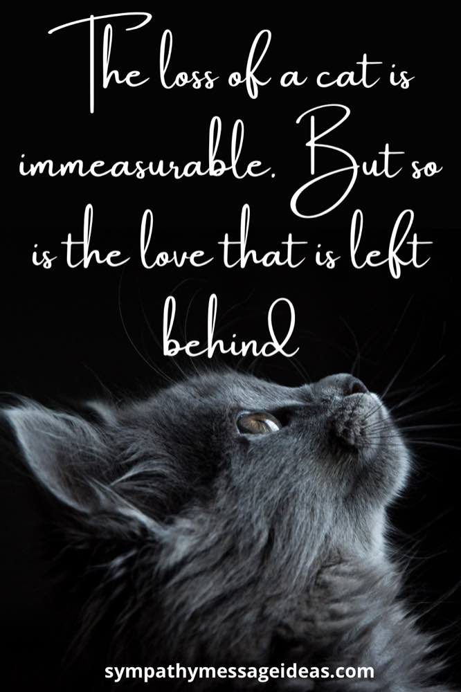 Love left behind loss of cat quote