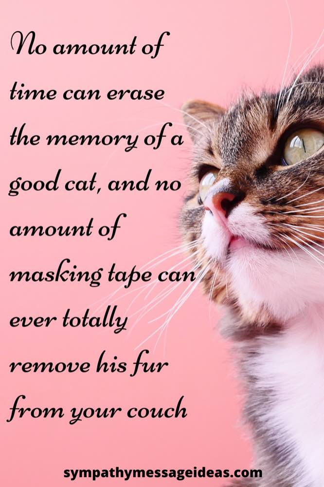 never erase the memory of a cat loss quote