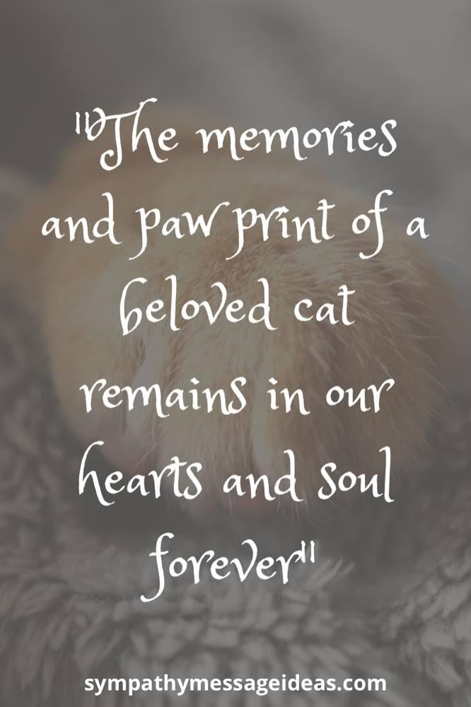 paw print memories cat loss quote