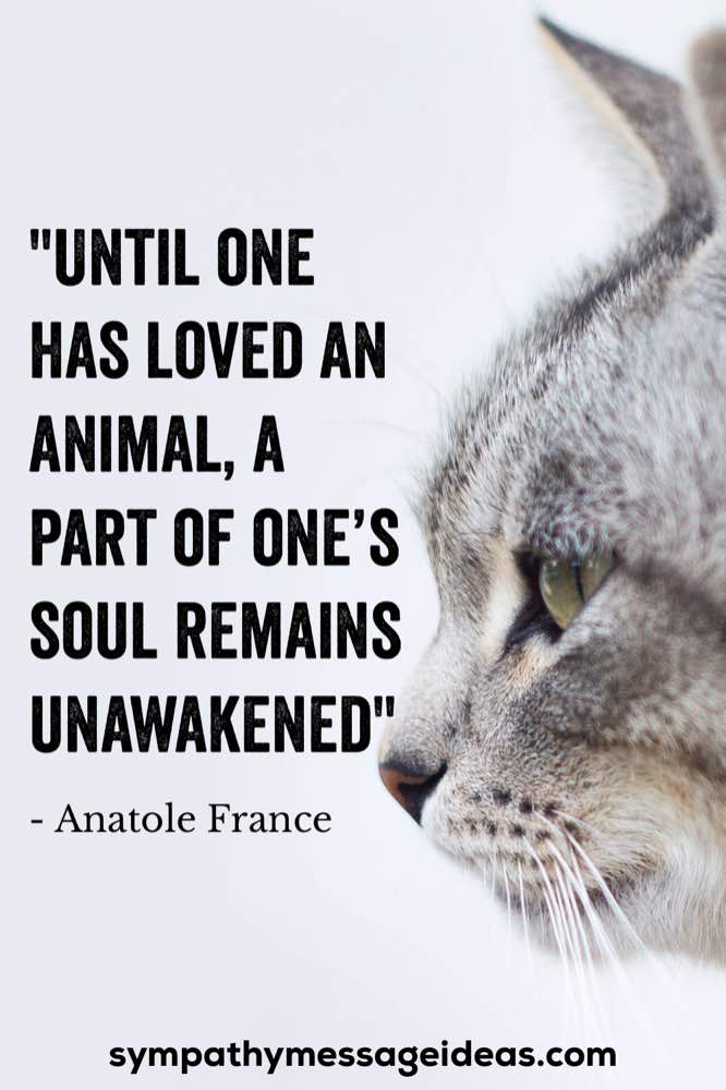 pet part of ones soul remains unawakened quote