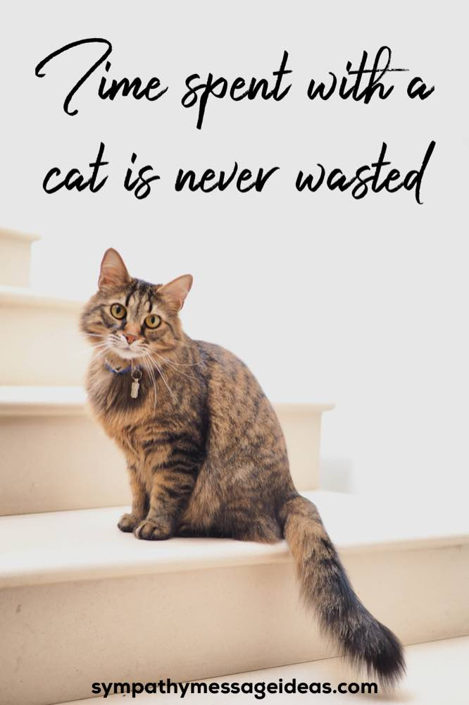 time spent with a cat is never wasted quote