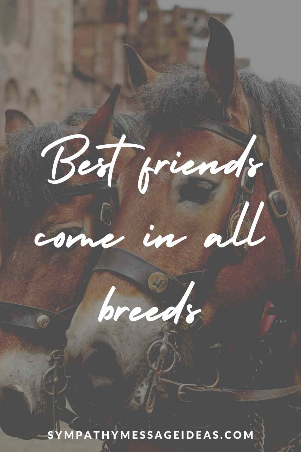 best friends come in all breeds quote