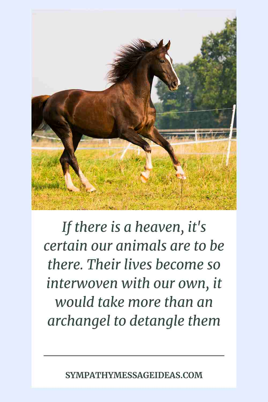 horse pet loss message