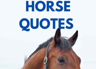 loss of horse quotes