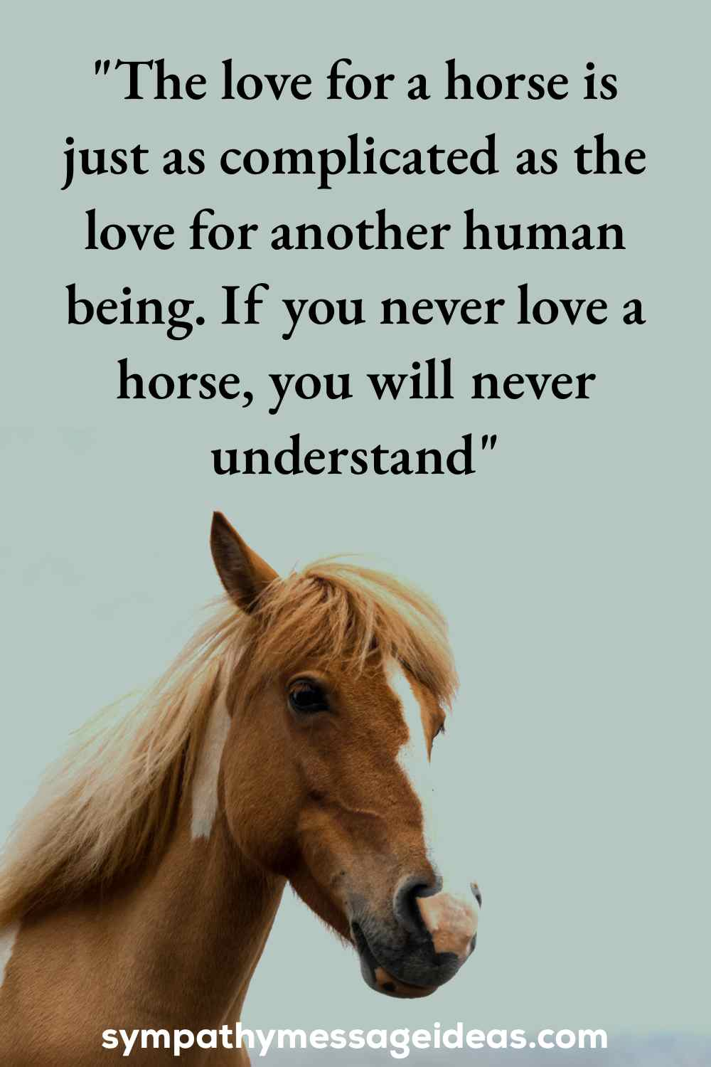 loved a horse loss quote
