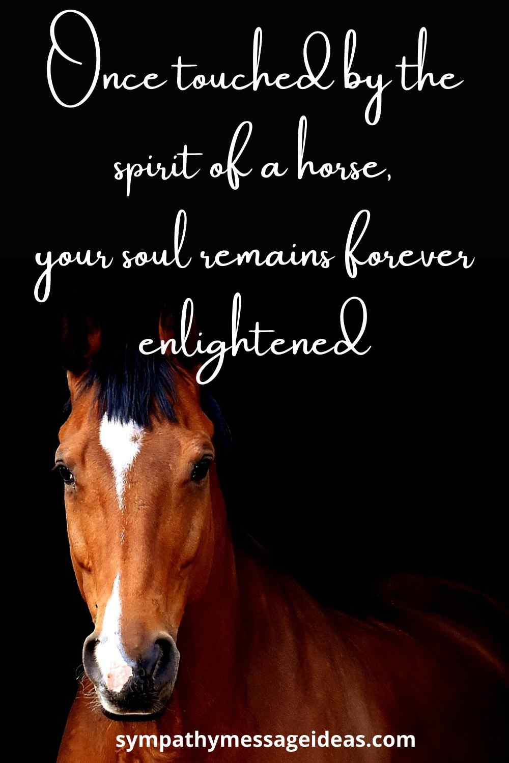 touched by a horse quote